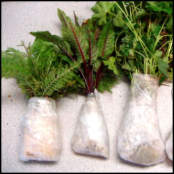 rsz_plants_with_plastic_wrapped_roots